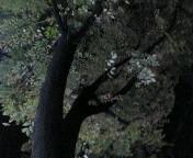 image/sayamayumi-2006-11-17T01:02:50-1.jpg