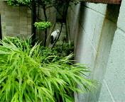 image/sayamayumi-2006-11-24T23:45:49-1.jpg