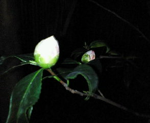 image/sayamayumi-2007-03-08T23:43:19-1.jpg