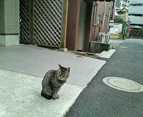 image/sayamayumi-2007-03-09T23:53:06-1.jpg