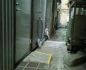 image/sayamayumi-2007-03-11T21:11:53-1.jpg