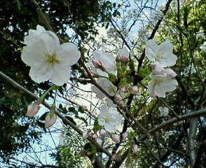 image/sayamayumi-2007-03-29T23:52:13-1.jpg