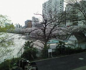 image/sayamayumi-2007-04-02T00:04:14-1.jpg