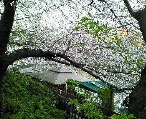 image/sayamayumi-2007-04-05T23:59:05-1.jpg